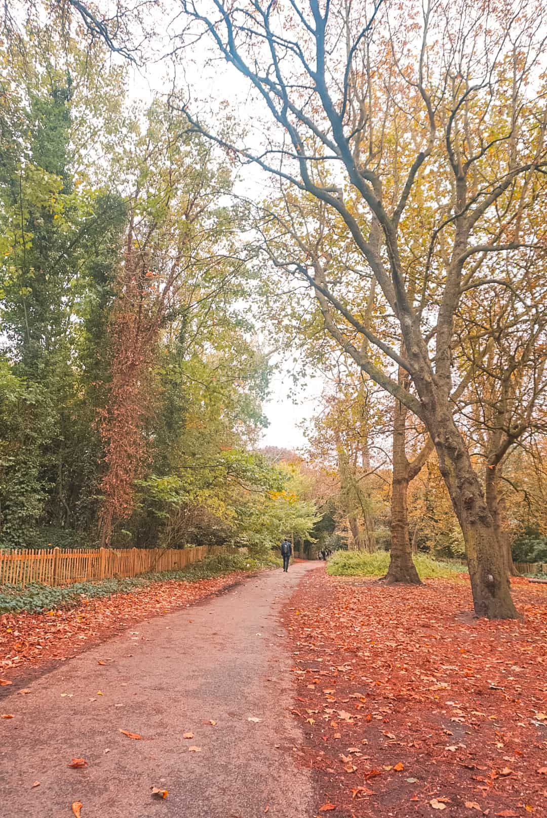 Pathway at Holland park