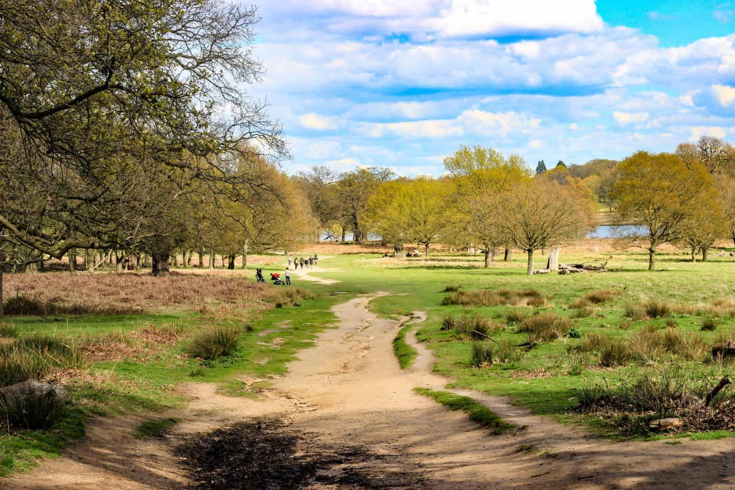 Richmond Park During the Day