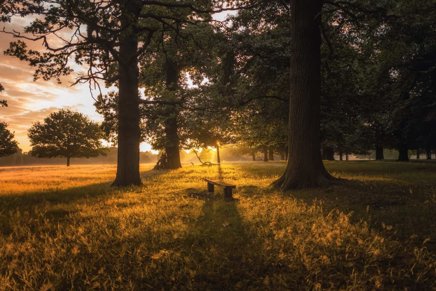 Richmond- Park- During- Sunset