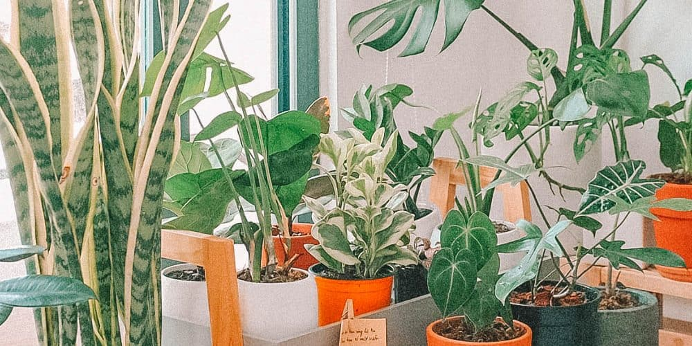Plant-Shops-in-London
