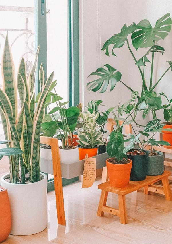 5 Beautiful Plant Shops in London To Visit Today