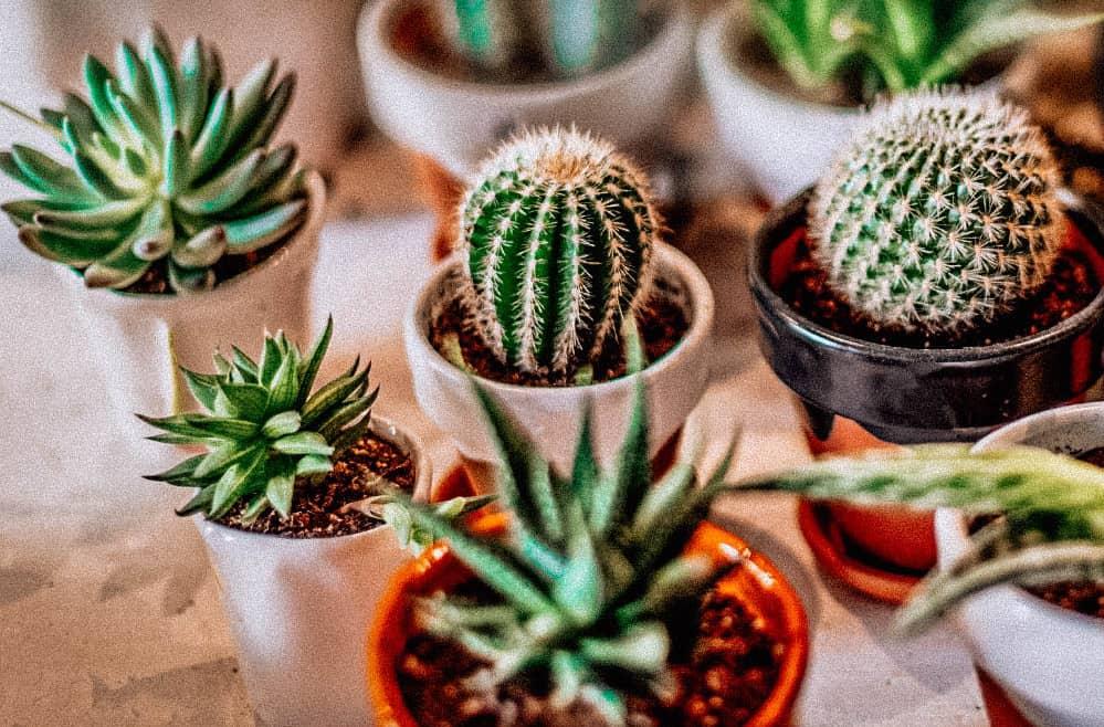 plant-shops-london