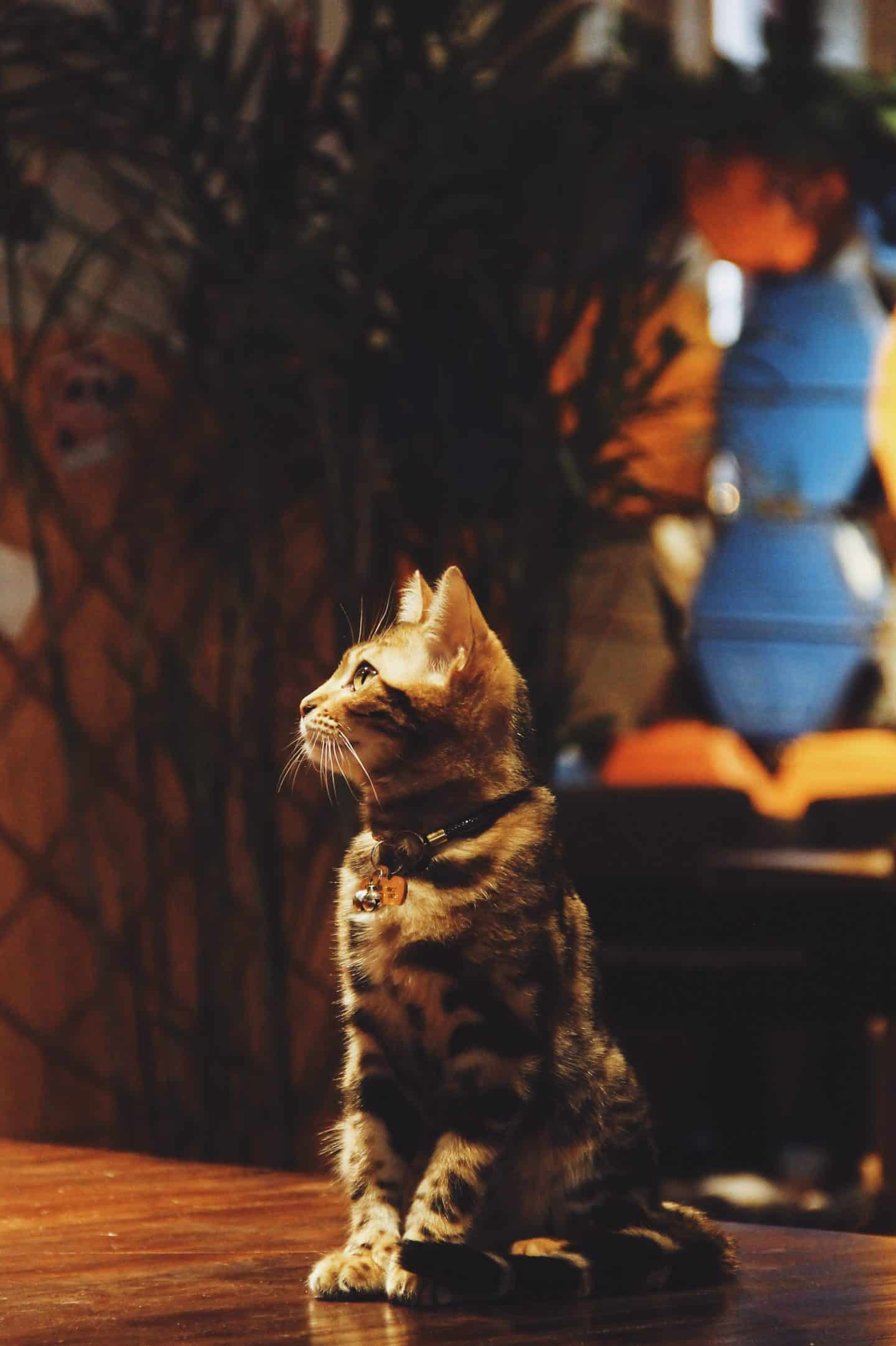 Cat-Cafes-in-London