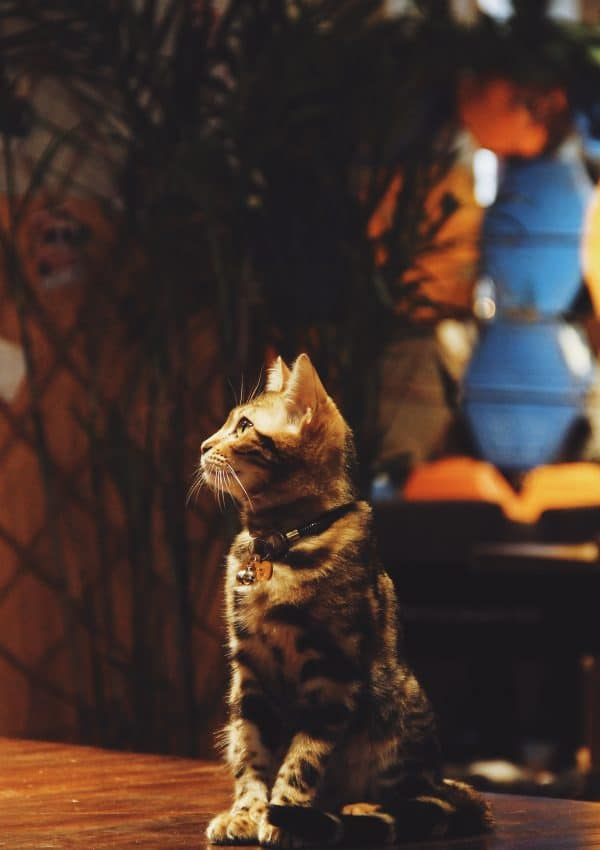 Meow! Best Cat Cafes in London You Have to Visit